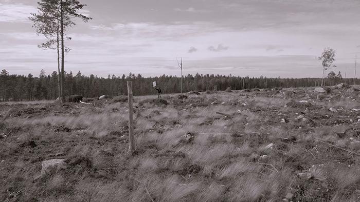 Rovaniemi 3 BW 1 Comment penser librement à lombre dune chapelle?